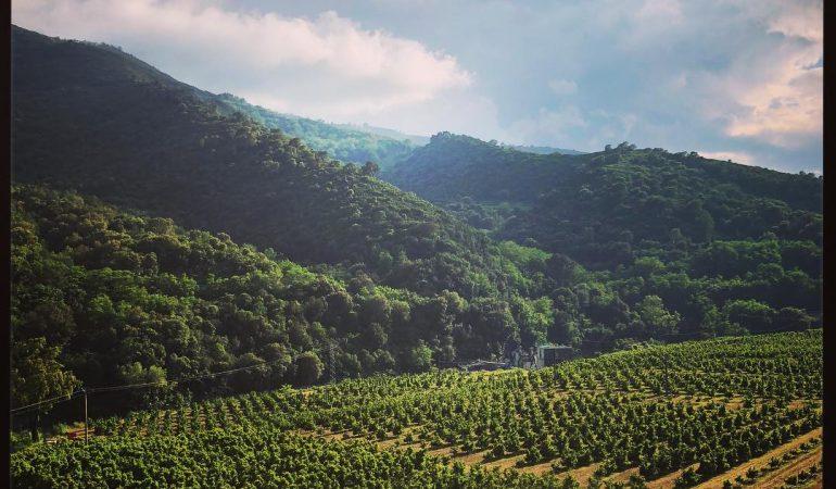 Agriculture biologique Corse