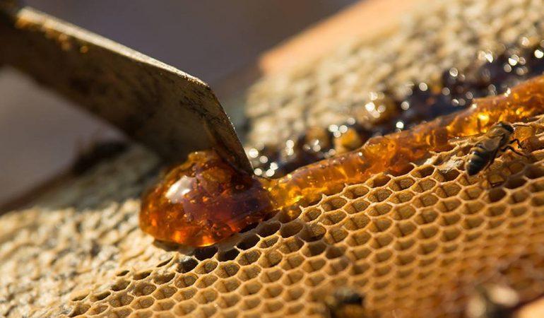 Le miel Corse