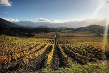 Sélection de vins AOC Corse